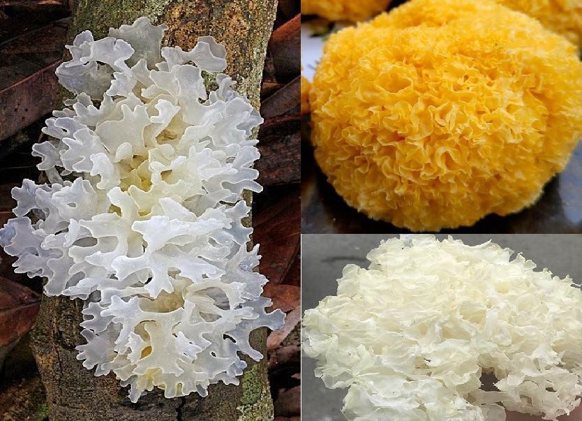 Nấm tuyết với tác dụng của nấm tuyết và cách dùng ngon bổ dưỡng